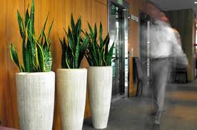 Plantes d int rieur la lumi re artificielle id e d co - Grandes plantes d interieur ...