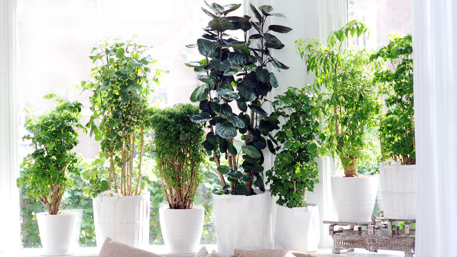 Plantes d coratives d interieur id e d co - Deco plante interieur ...