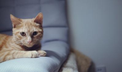 Comment cacher la litière de son chat ?