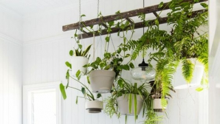 Déco : des plantes dans la salle de bain