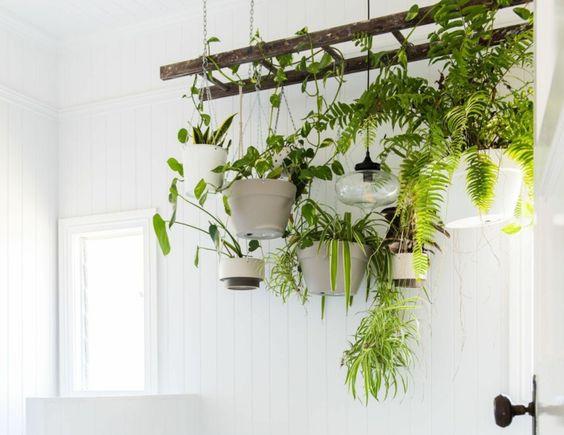 plantes suspendues baignoire salle de bain