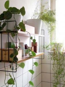 plantes étagères salle de bain